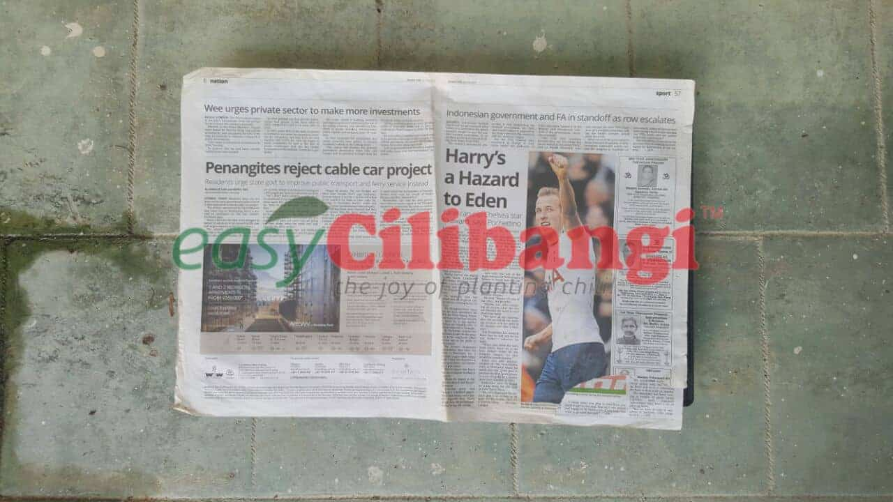 Kertas surat khabar terpakai digunakan untuk menutup permukaan dulang semaian.